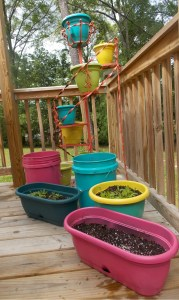 Growing Container Vegetables
