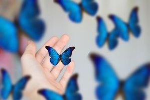 blue butterflies on a hand