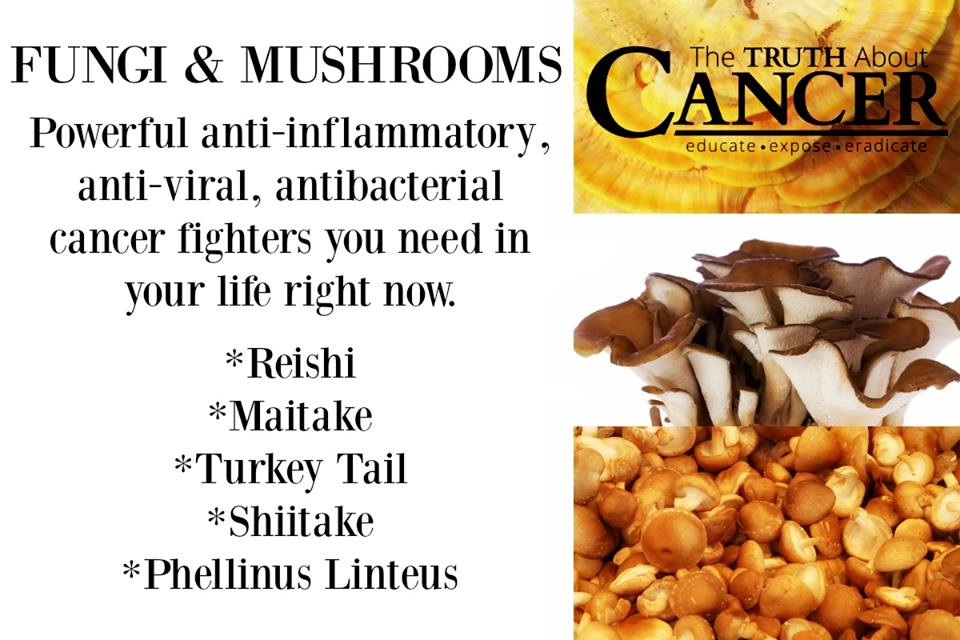 Avoid Cancer with Fungi and Mushrooms