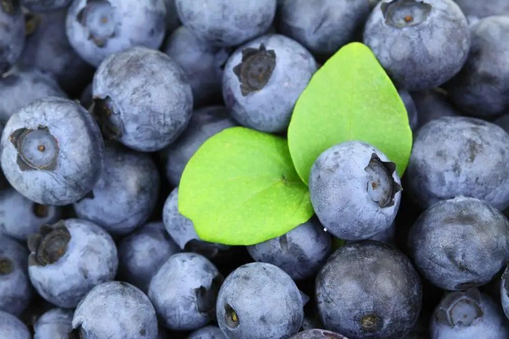 Grain free, Paleo style blueberry pancakes