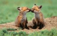 صور مذهلة للحيوانات البرية من احلى عالم