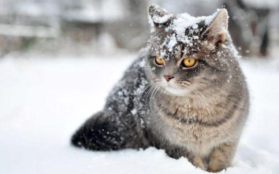 لقطات مميزة لحيونات على الثلج