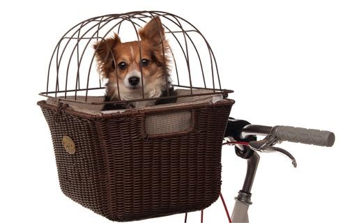اصنع اماكن مفضلة للحيوانات