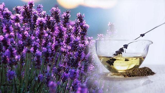 فوائد اللافندر وخواصه في مقال شامل ومميز تعرف على فوائد عسل اللافندر الرائع