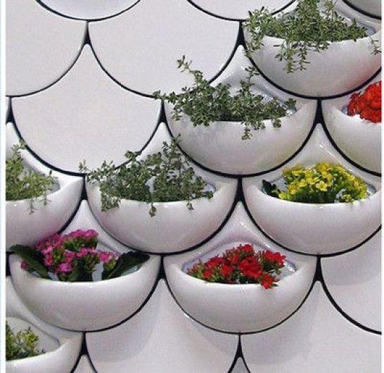 صور أوعية نباتات منزلية