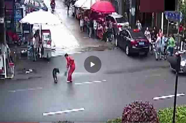 فيديو كلب مسعور يعض أكثر من 20 شخص في الصين قبل التخلص منه