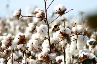 Puuvillan laatu selviää tuotetiedoista