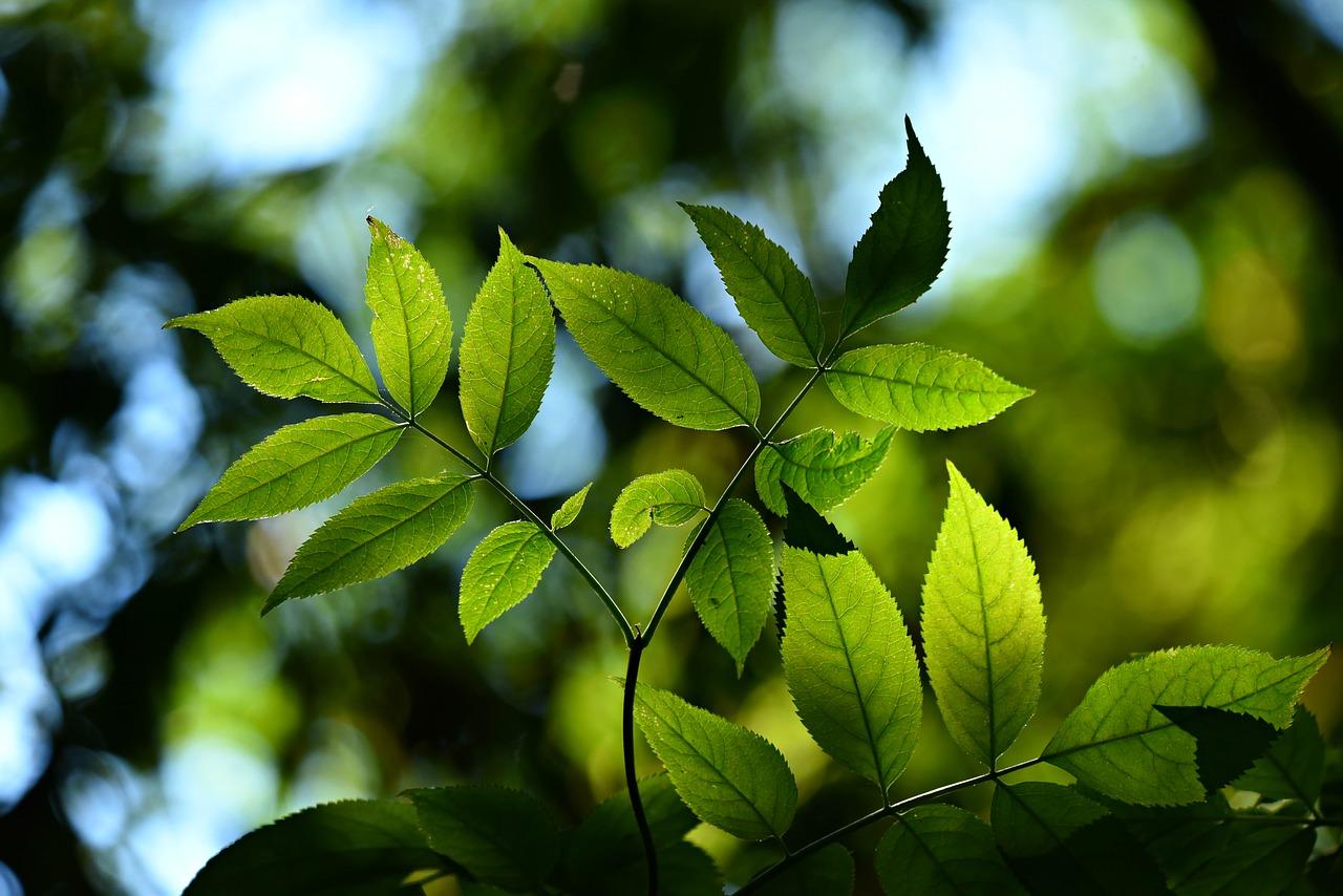 association_AH_developpement-durable