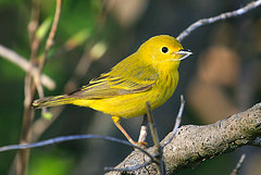 Bird Watching @ Yurt Deck   Circleville   West Virginia   United States