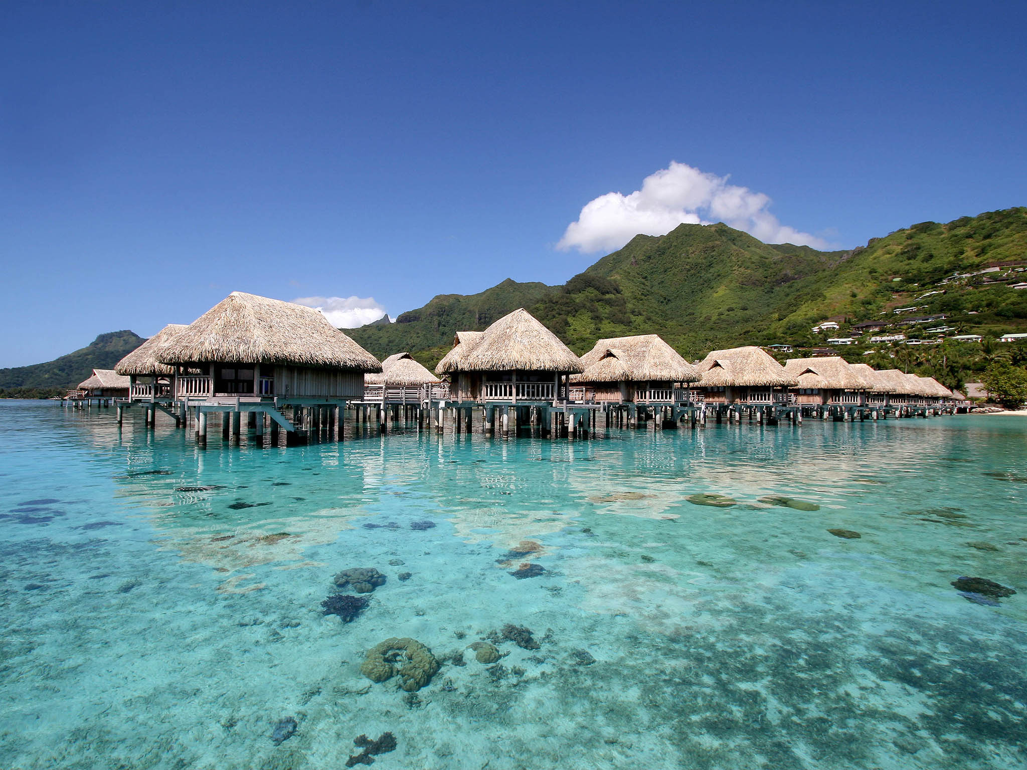 Image result for sofitel moorea ia ora beach resort