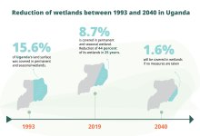 Photo of Reaping from harm; a slow extinction of Uganda's wetlands