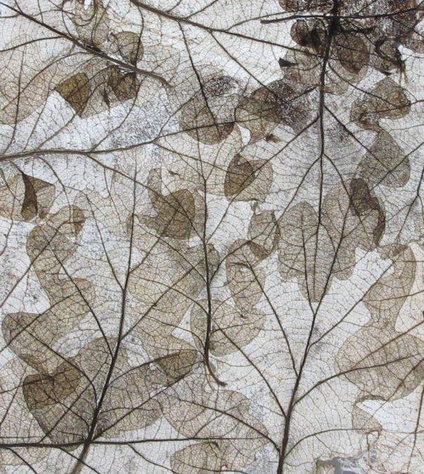 L'art au bout des feuilles
