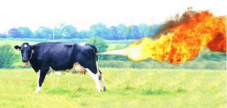 Cow expresses displeasure at photographer