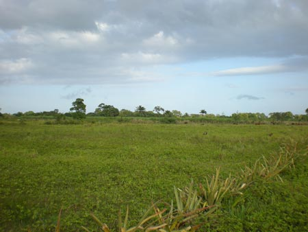 Potential Site for the Municipal Biogas plant