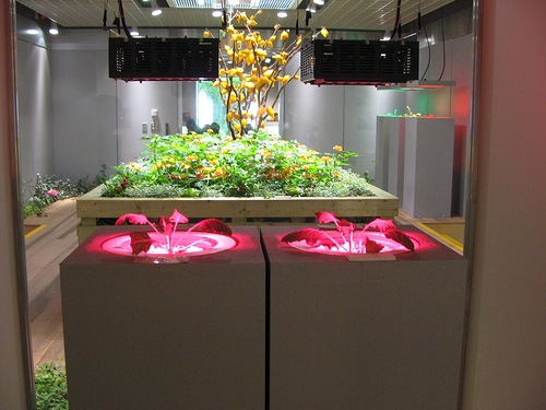 Japanese underground farm