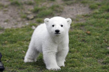 Knut, the blogger