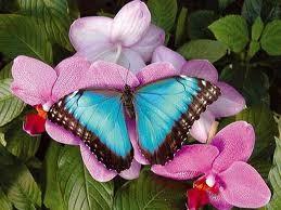 papillon-bleu (1)
