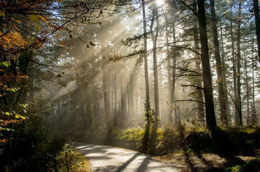 Zuhaitzek iragazitako eguzki errainuak (Sun light filtered by the trees)