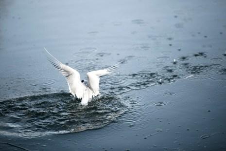 Kotisivut Baltic Sea_Aino Huotari (3 of 9)