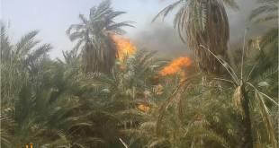 حريق يجتاح بساتين البركة