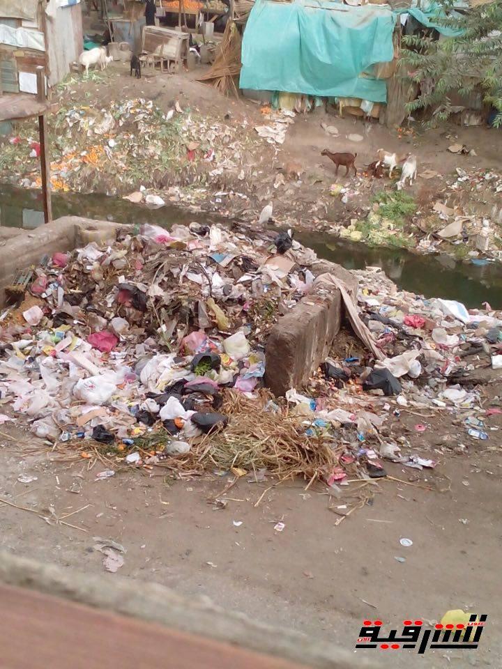 أهالى منطقة النجدة بالزقازيق يصرخون : إنقذونا من تراكم القمامة!!