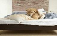 3 مخاطر يتسبب فيها مشاركة الكلب صديقه الإنسان السرير وقت النوم.. تعرف عليها