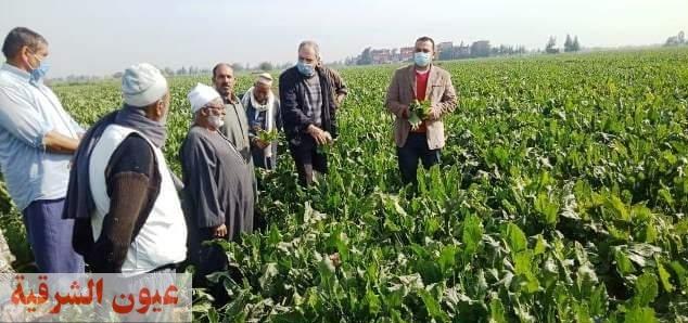 زراعة الشرقية تنفذ مدرسة حقلية إرشادية عن محصول البنجر بقرية أولاد موسي بأبو كبير
