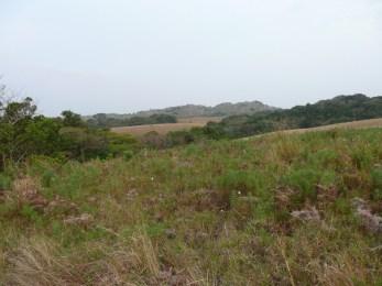 Ongoye Forest Reserve