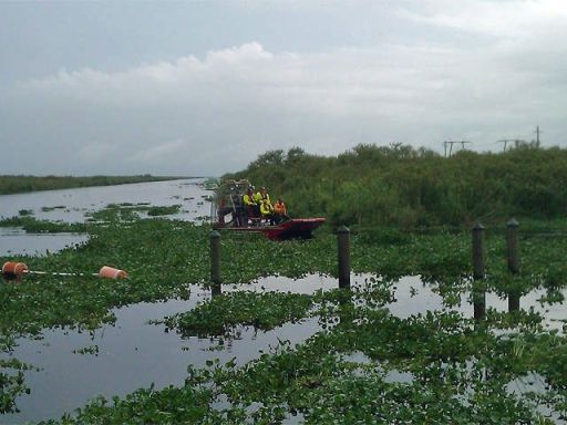 Everglades plane crash kills pilot