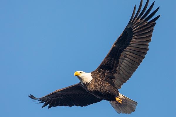 everglades birds 02
