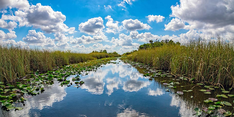 Marjory Stoneman Douglas And the River of Grass