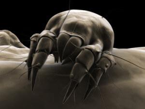 deposit photos black and white dust mite 400x300