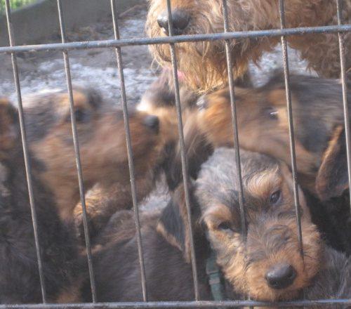 Wir sind hinter Gitter, in einem großen Hundegarten.