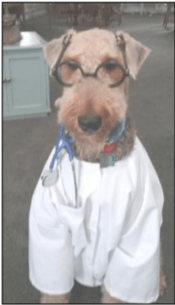 Dudlee Meyer - Rescued Airedale Terrier ready to start his day as a therapy dog.