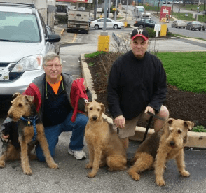 Amber Airedale being transported for rescue