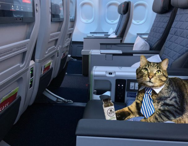A380cat has an important business meeting, so classed it up with a tie and Delta's Premium Select.