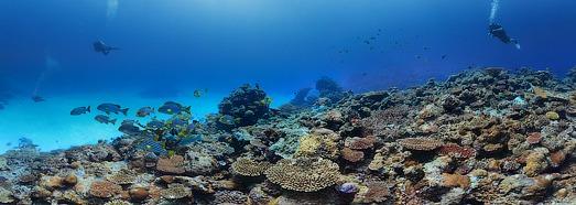 Подводный мир Мальдив. Коралловый риф - AirPano.ru • 360 Градусов Аэрофотопанорамы • 3D Виртуальные Туры Вокруг Света