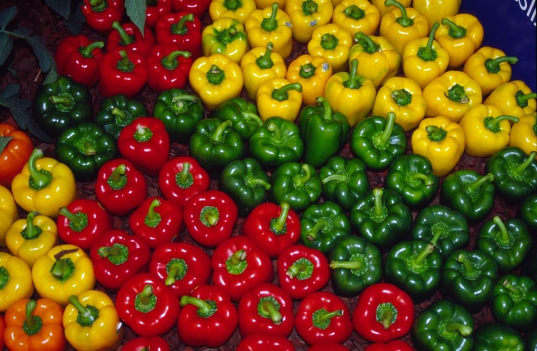 Capsicum Varieties