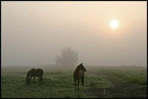 horses_in_the_fog_by_betuwefotograaf