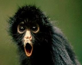 Mono flipando o alucionado