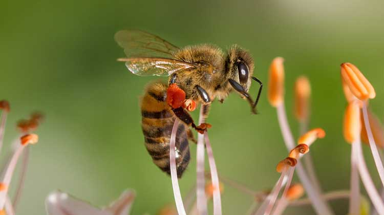 interesting facts about honey bee in hindi