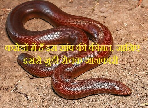 Hindi Fatcs About Red Sand Boa Snake