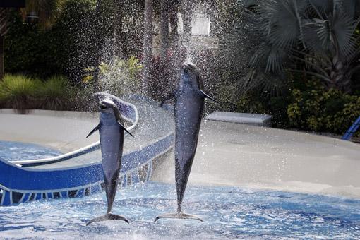 Show dos golfinhos SeaWorld