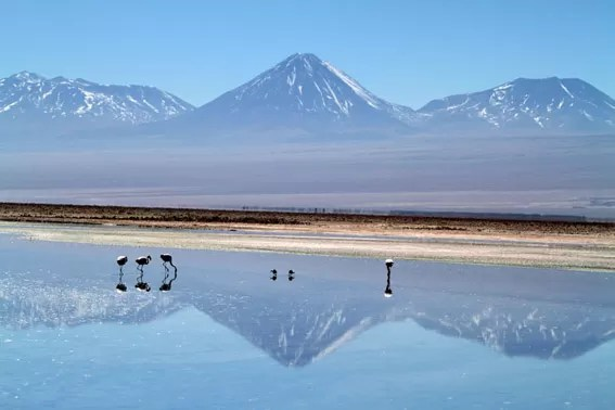 Os Flamingos do Salar do Atacama