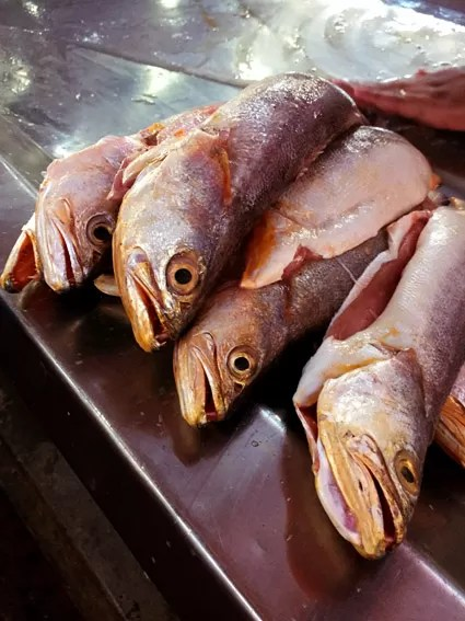 Peixes a venda no Mercado Ver o Peso