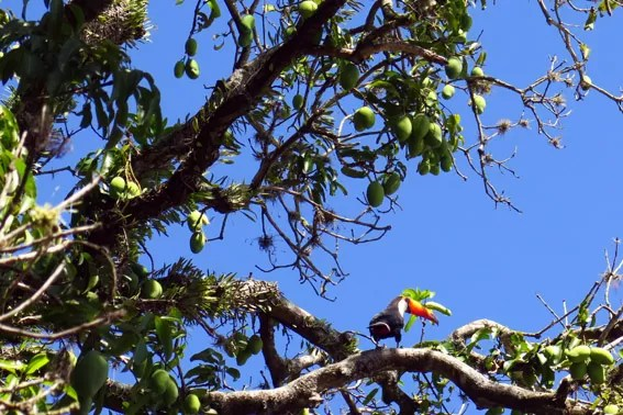 tucano-fazenda-capoava