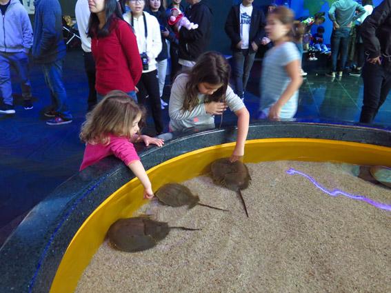 Aquario de Toronto crab