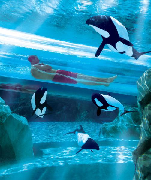 Dolphin_Plunge parque Aquatica Orlando
