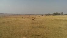 Stretching plains