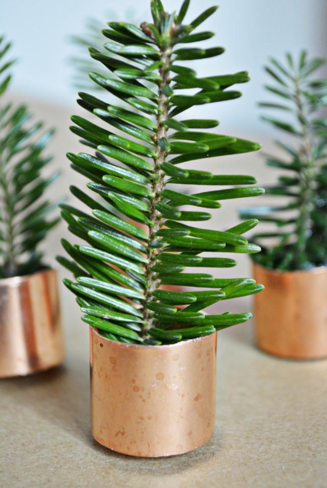 copper trees10